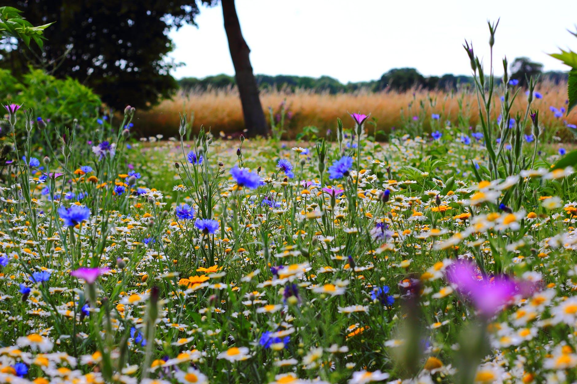 flowers summer meadow wild flowers