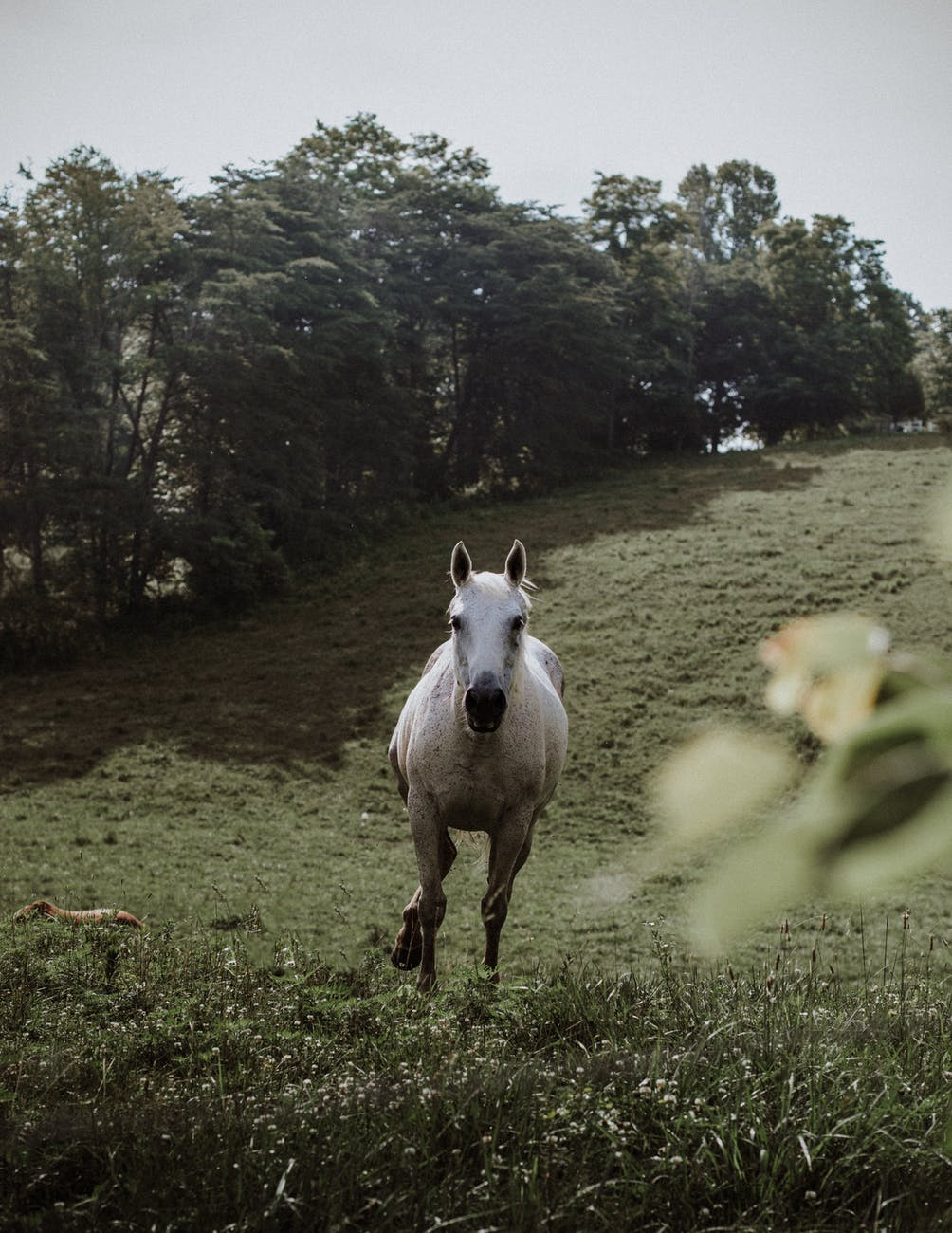 photo of white horse running in grass field
